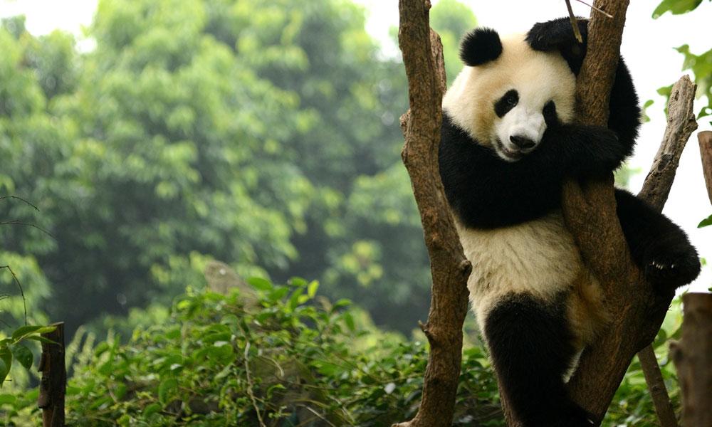 Goolge's New Panda 4.0